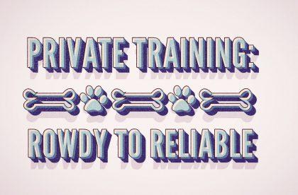 Group Dog Training Class Cary, NC