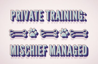 All Dogs Allowed Private Training Program - Mischief Managed - Cary NC