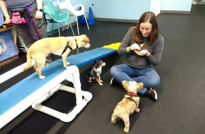 Doggie Dates Group Class - Small Group - Cary NC