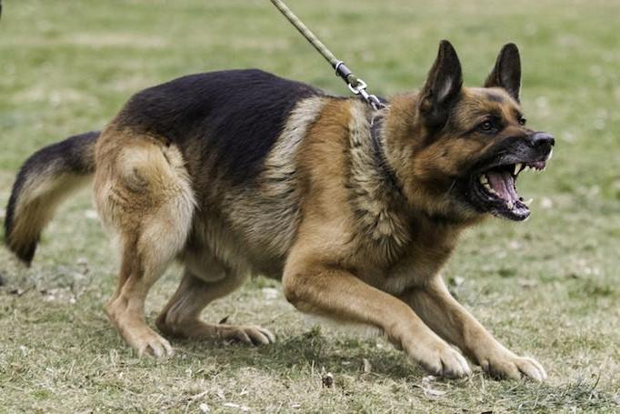 Reactive Rehab - Dog Training & Behavior Modification Seminar - Cary NC