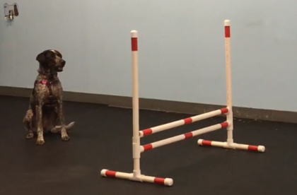 Agility for Fun Group Class - Luna - Cary NC