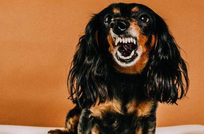 speakdog