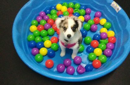 Puppy Starters Group Class - Daisy - Cary NC