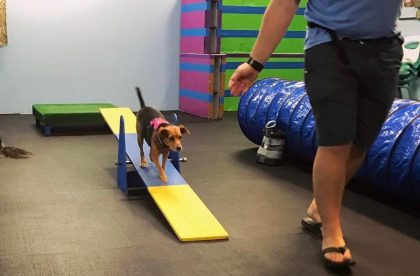 Agility for Fun Group Class - Pippa - Cary NC