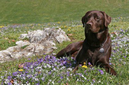 Foster 411 Dog Training Seminar - Cary NC