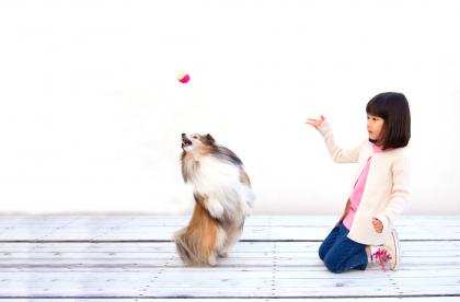 dog trainer banner