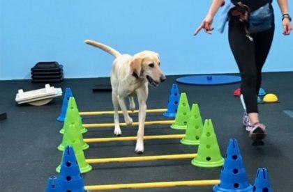 Canine Fitness Seminar Cary NC