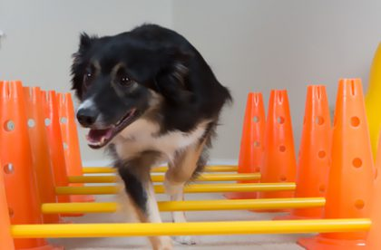 canineconditioning